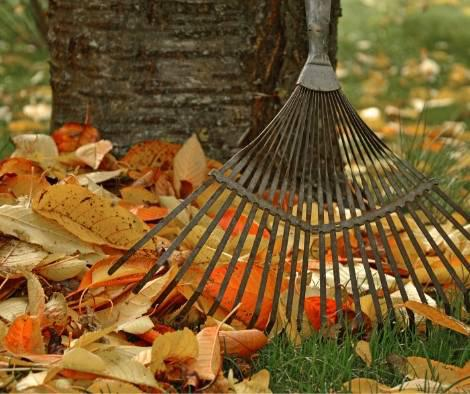 A photo of autumn leaves and a rake